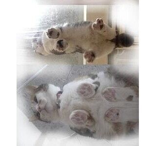 猫の肉球を下から観賞できる「肉球ロード」が登場