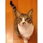 兵庫県神戸市で、保護猫の譲渡会が開催!