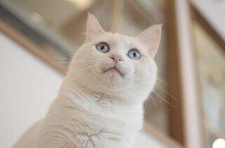 猫と一緒にヨガをする話題の「ネコヨガ」を体験してきた! - 画像126枚