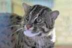 水族館なのに「ネコ」を展示!? 鳥羽水族館で日本初の試み