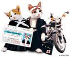「なめ猫免許証」が無料で作れる「なめ猫免許センター」公開