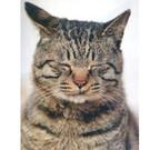 東京都・神保町で猫だらけのイベント「書泉ねこナイト」開催