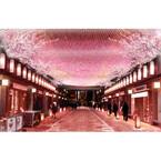 日本橋で「桜フェスティバル」開催 - 特別メニューや幻想ライトアップも