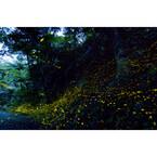 石垣島で日本最小ホタルと幻想的な時間を - 観察ツアー付き宿泊プラン販売