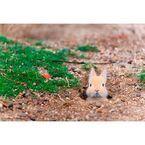 福田幸広写真展「ぼくらはみんな生きている!」-動物たちの幸せの瞬間-