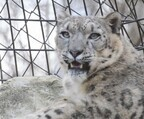 東京都・多摩動物公園のネコ展で、ネコ科動物に会ってきた! - 画像254枚