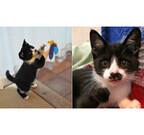 全国の「看板猫ランキング」発表