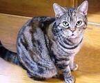 兵庫県神戸市のフェリシモ本社で「猫の里親譲渡会」開催