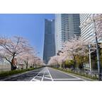 神奈川・横浜みなとみらいで「さくらフェスタ」 - グルメストリートも登場