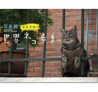 東京都・日本橋で、写真展「岩合光昭の世界ネコ歩き」開催