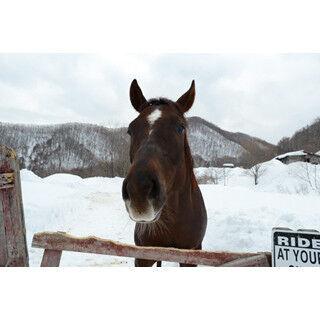 看板犬に番猫も! 馬と北海道の銀世界を歩いたら癒やしが残った--写真26枚