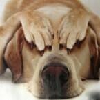 ペットを飼う人は要注意! 留守番のストレスから抗うつ剤の処方例が急増(英)