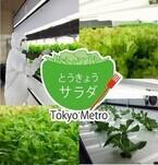 東京メトロ、東西線高架下の植物工場で栽培した野菜を販売開始