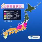 東京都では桜吹雪、桜前線は東北に - 第六回桜開花予想発表