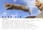 東京都渋谷区で、猫写真展「ねこ専」が開催