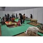千葉県・幕張メッセで「Pet博」開催! 犬猫とのふれあいや鳥のダンスも