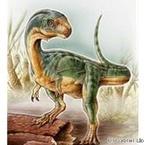 ティラノサウルスなど属する獣脚類に草食の恐竜 - 南米チリで発見