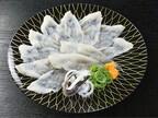 くら寿司、ふぐの刺身「てっさ」などを提供する「極上ふぐフェア」を開催