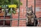 人気番組「世界ネコ歩き」の岩合光昭先生に、猫の撮り方を聞いてきた!