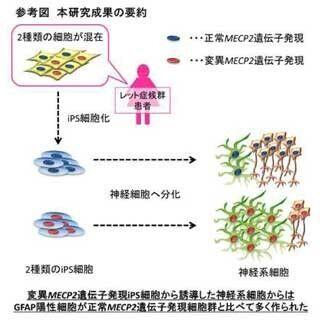慶大、レット症候群患者からiPS細胞を樹立 - 神経発生異常を特定