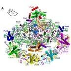 岡山大、光合成で太陽光をエネルギーに変換するタンパク質の構造を解明