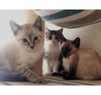 兵庫県神戸市で、猫の譲渡会が開催