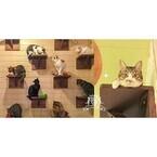 東京都・御茶ノ水に保護猫カフェ登場! 出資すると猫の命名権ももらえる!