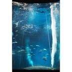 東京都・葛西臨海水族園が、マグロ1尾のみだった水槽に魚を導入