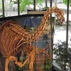 東京・丸の内に欧州最大の恐竜「トゥリアサウルス」が出現!