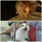 ゴミ捨て場で保護した元捨て猫が3年経つとこうなる - Before After画像