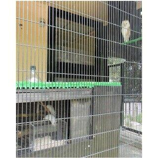 東京都・井の頭自然文化園が、フクロウとネズミを同居させた展示を開始