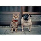 東京都・池袋で猫の世界を岩合光昭氏が魅せる! 写真展「ねこ」開催