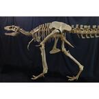 千葉県・幕張メッセで「メガ恐竜展」開催! 恐竜のウンチ化石のプレゼントも