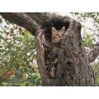 自慢の猫写真に岩合光昭氏が「今日のいい子だね~」認定!?--写真展イベント