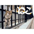 東京都や神奈川県でも! 岩合光昭の猫写真展、全国各地の開催情報