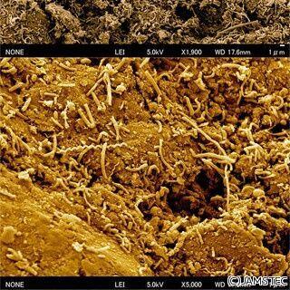 海底下2500mに微生物の群れ - JAMSTECなどが青森県・八戸沖で発見