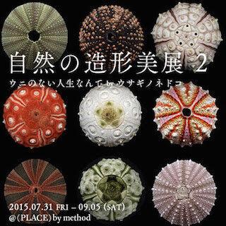 東京都・渋谷にて、「ウニ」の造形美の魅力と美しさに迫る展示会