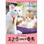 白猫・玉之丞とワイモバイルCMの猫・春馬が共演! 猫だらけDVD第2弾発売決定
