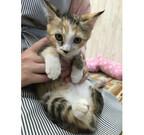 神奈川県鎌倉市で「仔猫祭り」が開催!!