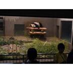 東京都・上野動物園で「真夏の夜の動物園」開催! ビアガーデンも延長営業