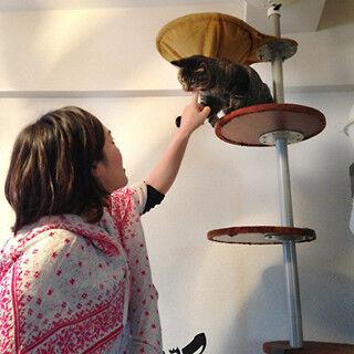 猫と暮らせるシェアハウスが人気すぎて満室に! その暮らしぶりを覗いてみた