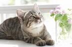猫からうつる人間の病気を獣医師が解説