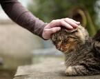 「岩合光昭の世界ネコ歩き」アメリカ・ニューオーリンズ編が放送決定