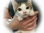 東京都豊島区で、266匹の猫の里親を募集中