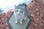 京都の老舗畳店が作った「猫転送装置」を使って猫を転送してみた