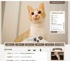 猫雑貨で有名なあのフェリシモ猫部の中の人を直撃インタビュー