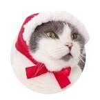 全国のガチャガチャに、猫のかぶりもの「ねこずきんちゃん」が登場