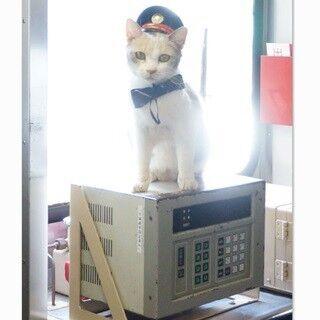 『先生と迷い猫』主役猫・ドロップが1日車掌就任! 猫テープカット映す動画も