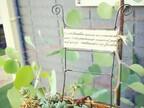 セリアのコットンリボンも活用! 鉢植えをステキに演出するガーデンピック♪