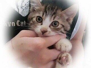 東京都豊島区で、248匹の猫の里親を募集中